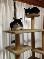 猫タワー争奪戦.JPG